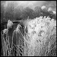 Alder Carr (Infrared Film Photography)
