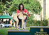 Westminster Dog of the Year 2016 <br /> in Victoria Tower Gardens, London, Great Britain <br /> 8th September 2016 <br /> organised by The Kennel Club and Dogs Trust together with dog loving MPs and Peers. <br /> <br /> <br /> <br /> <br /> 2nd place: Rebecca Harris MP with her dog Milo <br /> <br /> <br /> <br /> <br /> <br /> <br /> <br /> <br /> Photograph by Elliott Franks <br /> Image licensed to Elliott Franks Photography Services