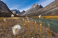 Morning light on Xanadu, Arial and Caliban peaks, Arrigetch Peeks, Alaska cotton grass along Arrigetch creek, Gates of the Arctic National Park, Alaska.