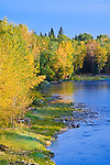 Fall color along the Bitterroot River just outside of Hamilton, Montana