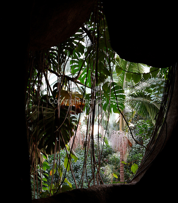 Tropical Rainforest Glasshouse (formerly Le Jardin d'Hiver or Winter Gardens), 1936, René Berger, Jardin des Plantes, Museum National d'Histoire Naturelle, Paris, France. View of the luxuriant Tropical vegetation from the cave in the Art Deco glasshouse.