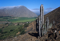 Valley of Moche River in arid Andes foothills with cactus; irrigated agriculture in valley.