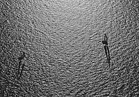 aerial view above two sail boats in San Francisco bay