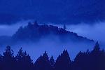 Morning fog among trees on Spring Mountain