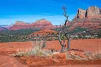 Sedona Arizona area landscape with red sandstone cliffs.