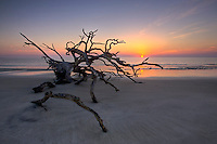 Sunrise on Driftwood Beach on Jekyll Island, GA