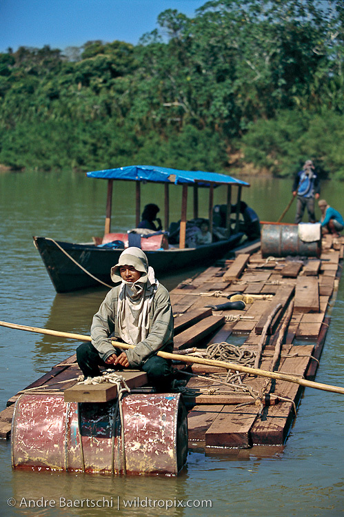 Illegal loggers with raft of mahogany and Spanish cedar boards (Swietenia macrophylla and Cedrela odorata), illegally cut in primary tropical rainforest along the Las Piedras River, Madre de Dios, Peru.