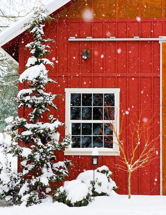 Gift card photo of a red barn with a window in the snow with a snow covered tree in front of the barn with snow piled up in a Wintry scene.