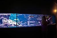 Cherbourg Cité de la Mer  Museo dedicato al mare l'acquario, bambina osserva i pesci