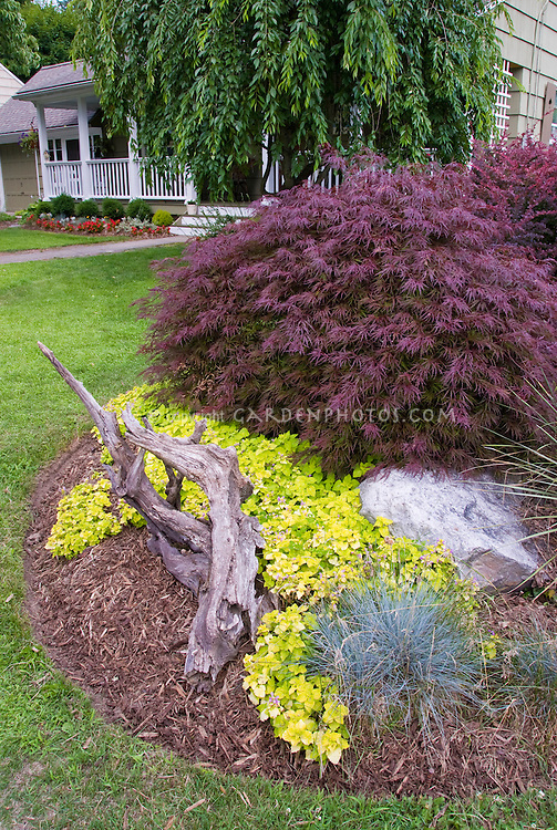 Acer palmatum Japanese maple tree, Lamium, Festuca, house