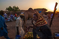 AGADEZ, NIGER &mdash; <br /> Camel traders, merchants and livestock sellers gather at the local market in Agadez. <br /> Agadez, is the largest city in central Niger with an estimated population of over 120,000 people. This city, comprised mainly of one-story mud structures, is situated on the southern outskirts of the Sahara desert and has been an important trade center for centuries. Tuareg and Berber tribes have traveled the many commercial routes that run through the desert for more than a thousand years. Today, this city has become one of the largest human smuggling and drug trafficking routes in West Africa. Thousands of migrants attempting to reach Europe are smuggled through the Sahara desert to Libya, Algeria and Morocco in their attempts to reach Italy and Spain.