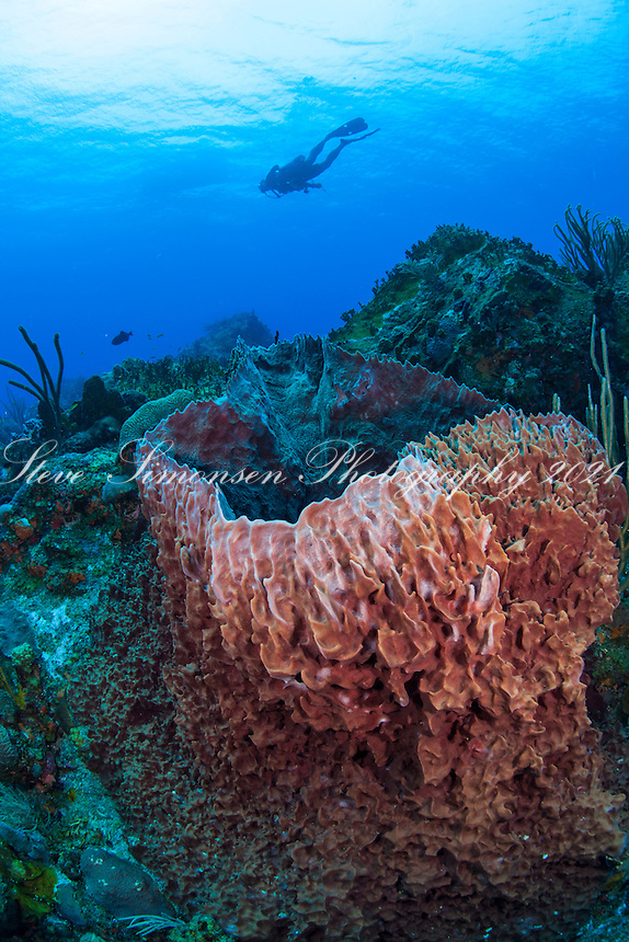 Reef Scenic at French Cap Cay<br /> US Virgin Islands