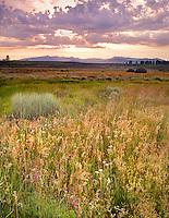 Spring Evening, Martis Valley