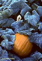 Pumpkins -  Life Cycle