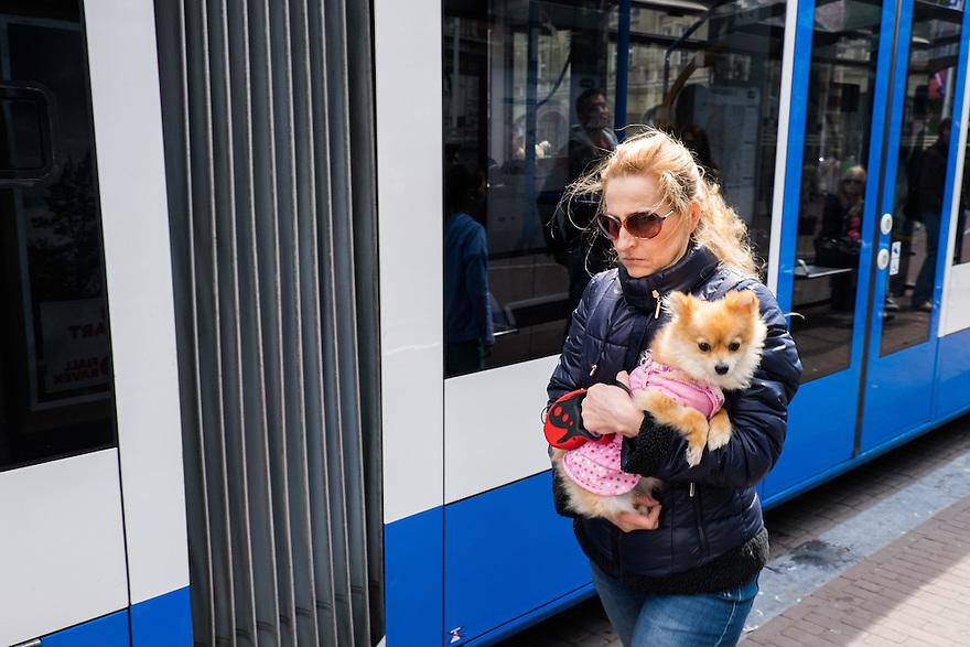 Nederland, Amsterdam, 30 mei 2015<br /> Vrouw met aangekleed hondje in de armen op de tramhalte. <br /> Foto: Michiel Wijnbergh
