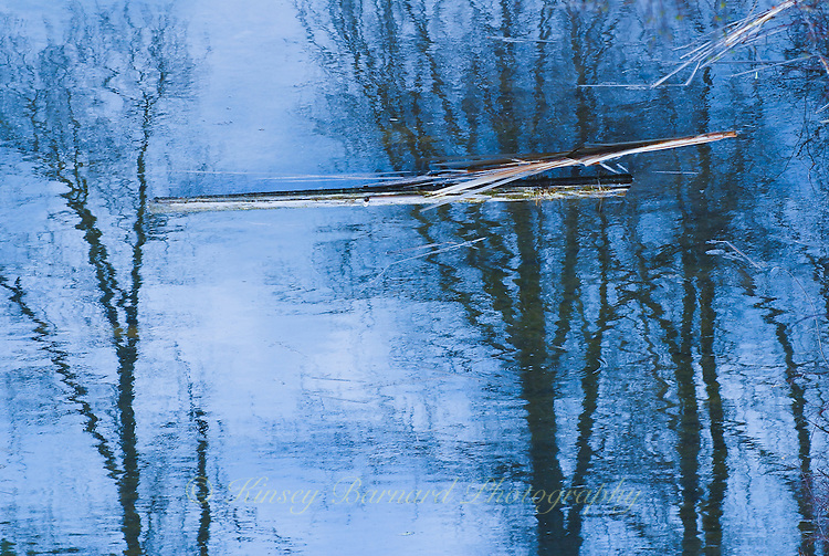 &quot;MOODY BLUE&quot;<br /> <br /> Log seemingly floating in the tree tops a juxtaposition of reality and illusion. nature is the consummate artist using water as her canvas. ORIGINAL 24 X 36 GALLERY WRAPPED CANVAS SIGNED BY THE ARTIST $2,500. CONTACT FOR AVAILABILITY.