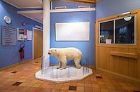 Polar Bear: Worst Case Scenario by Fredrik Naumann
