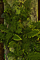 Fern, Moss, Fairchild Tropical Botanic Garden, HDR<br />