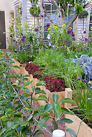 Beautiful raised bed den, Vegetables, carrots, peas, cabbages, flowers, irises, house, in lush variety growing together intermixed, fig tree, ornamental onions, blue flowers, purple flowers, red lettuce, edible landscaping