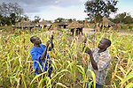 Girado Ajenga (left) and his son George Okiror inspect their harvest with their huts in the background. They and other Ugandan families who've been displaced by internal conflict for years have returned to Omeon, their village of origin, and are rebuilding their huts, cultivating their fields, and renewing their bond with the land. These families began returning home in April 2007.