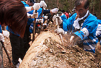 Festival participants strip the bark of the felled sacred fir at the Bassai ceremony during the Onbashira festival, where 16 sacred pillars are brought by hand to rejuvenate each the upper and lower Suwa Shrines in Nagano Prefecture.