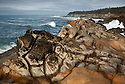 OR01184-00...OREGON - Rough surf pounding against the weathered sandstone cliffs at Shore Acres State Park.