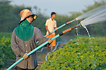 Vann Monthy, 18, waters a vegetable field in the Cambodian village of Talom. Behind her, her brother Vann Piseu, 16, helps out.