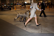 Lindsey Kuhn keeps stride with her Afghan Hound, Windy. Kennel Club Dog Show, Championship Purebred AKC, Graham Building, N.C. State Fairgrounds. Sunday, March 25, 2012.