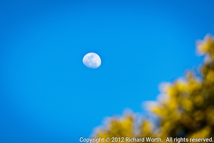 A gibbous moon with blurred green leaves as foreground.