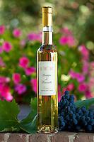 La Fornace Grappa di Brunello Riserva bottle at wine estate of La Fornace in Val D'Orcia, Tuscany, Italy