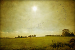 A painterly rural and empty landscape on an sunny day with a flock of birds flying by