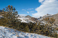 Absaroka Mountains in the Shoshone National Forest Wyoming