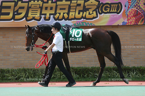 Dahlonega, JULY 26, 2015 - Horse Racing : Dahlonega is led through the paddock before the Toyota Sho Chukyo Kinen at Chukyo Racecourse in Aichi, Japan. (Photo by Eiichi Yamane/AFLO)