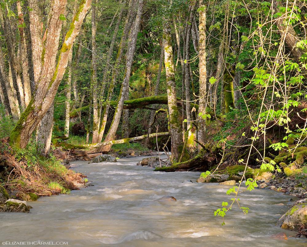 Sulphur Springs