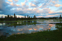 This lake is really a meadow, flooded by a very high spring runoff. A natural occurrence which actually nourishes the micro ecosystem of the area.  Norris, Yellowstone