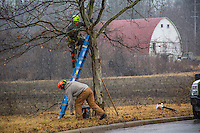 City workers trim trees on Cooper Rd. during the beginnings of a snow storm.