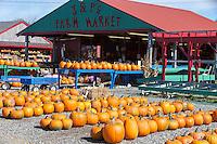 Pumpkins ready for Halloween at J & P's Farm Market in Trenton, Maine.