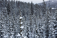 Trees at Showdown Ski Area on King's Hill in the Little Belt Mountains near Neihart, Montana, USA.