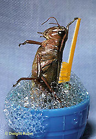 Comical Grasshoppers