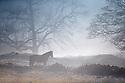 2017_01_10_Frosty_Horses