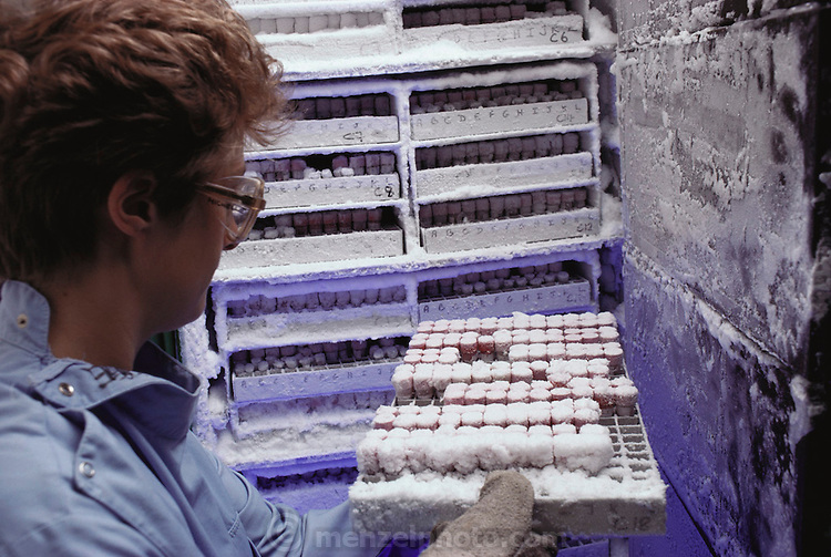 (1992) Blood storage. Blood samples being stored in a cryogenic freezer. The blood can be used to produce a DNA fingerprint even after years of storage. Selected DNA extracted from the blood is separated into DNA bands by electrophoresis in an agarose gel. The pattern of DNA bands is unique to each person, but related people, such as a parent & child, share some bands. DNA fingerprints can be used to prove conclusively whether people are related. It can also be used to identify and convict criminals from blood, semen or hair left at the scene of a crime.  Cellmark Diagnostics, a commercial laboratory near Oxford, UK.