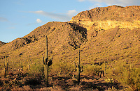 Mesa, Arizona. An scene at the Usery Mountain Regional Park The sunset light baths the mountain and cacti on this summer's afternoon. Photo by Eduardo Barraza © 2015