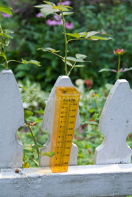 Taylor Plastic Raingauge with markings in inches and centimeters, mounted on white picket fence to monitor garden rainfall amounts