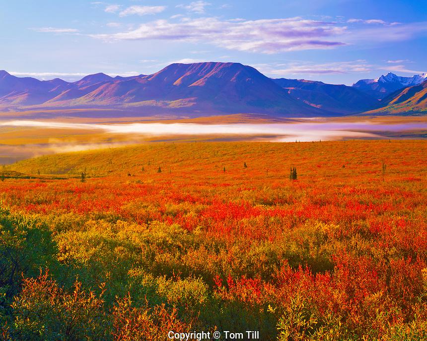 Morning Light on the Tundra, Denali National Park & Preserve, Alaska