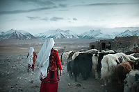Kyrgyz women bringing the yak herd back to its pen..In and around the campment of Kyzyl Qorum, campment of the former deceased Khan, Abdul Rashid Khan..Trekking with yak caravan through the Little Pamir where the Afghan Kyrgyz community live all year, on the borders of China, Tajikistan and Pakistan.