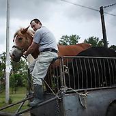 MYSLEWICE, POLAND, MAY 24, 2010:.Man evacuating his horse..The latest chapter of disastrous floods in Poland has been opened yesterday, May 23, 2010, after Vistula river broke its banks and flooded over 25 villages causing evacualtion of most inhabitants..Photo by Piotr Malecki / Napo Images..MYSLEWICE, POLSKA, 24/05/2010:.Zatopiony dom Krystyny Ciastek.  Najnowszy akt straszliwych tegorocznych powodzi zostal rozpoczety wczoraj gdy Wisla przerwala waly na wysokosci wsi Swiniary kolo Plocka..Fot: Piotr Malecki / Napo Images ..