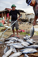 Philippines. Province Eastern Samar. Hernani. 95 % of the town was destroyed by typhoon Haiyan's winds and storm surge. Fishermen sell fresh tuna fishes on a makeshift market. Typhoon Haiyan, known as Typhoon Yolanda in the Philippines, was an exceptionally powerful tropical cyclone that devastated the Philippines. Haiyan is also the strongest storm recorded at landfall in terms of wind speed. Typhoon Haiyan's casualties and destructions occured during a powerful storm surge, an offshore rise of water associated with a low pressure weather system. Storm surges are caused primarily by high winds pushing on the ocean's surface. The wind causes the water to pile up higher than the ordinary sea level. 26.11.13 © 2013 Didier Ruef