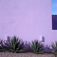 The shapes of agave plants are graphically outlined against a lilac-painted wall in the garden of this house in Mexico