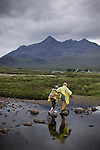 A couple crosses a creek on the Isle of Skye, Scotland