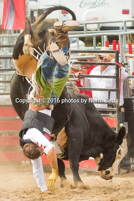 RAM Rodeo 2016 at Tweed, Ontario, Canada<br />